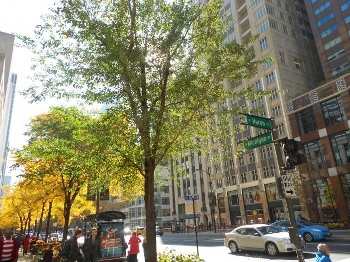 Michigan Avenue Shopping