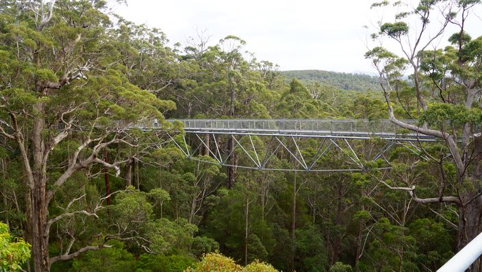 Tree Top Walk Valley of the Giants Australia