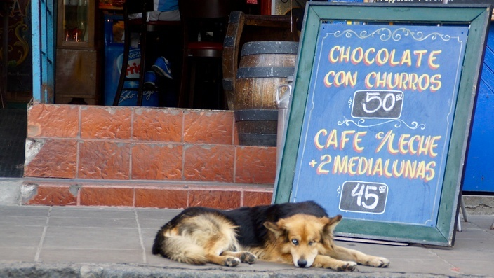 Buenos Aires Hund