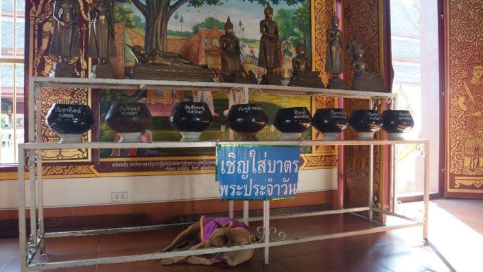 Chiang Mai Temple Wat