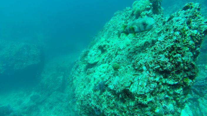 Scubadiving Koh Lanta corals