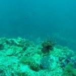 Scubadiving Koh Lanta lion fish