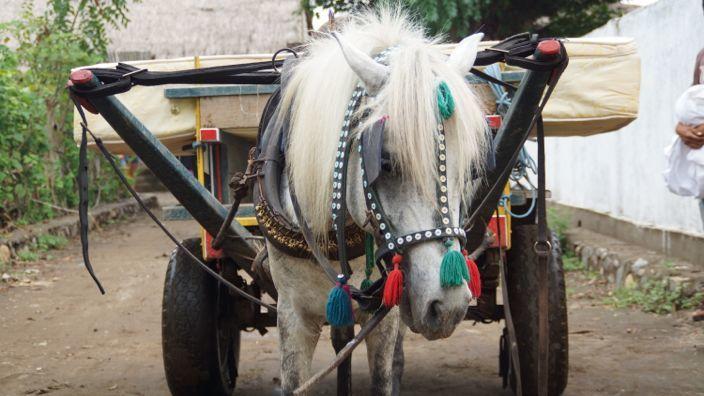 Gili T Horse