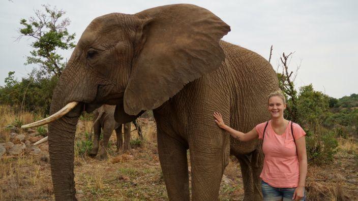 Glen Afric Elephant Walk Johannesburg