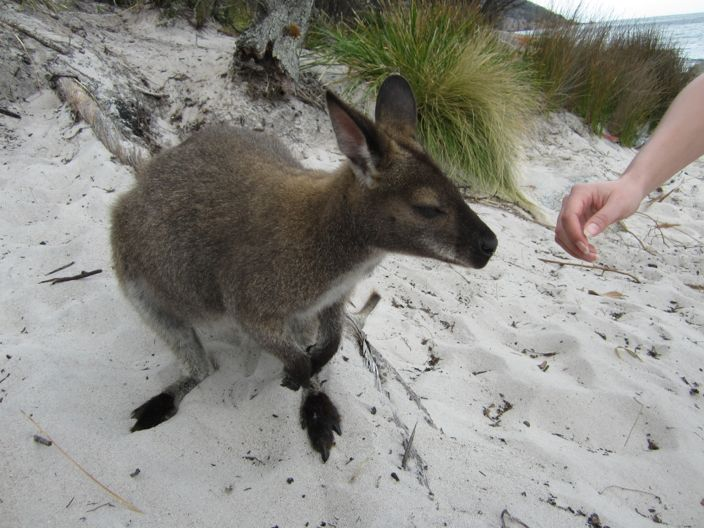 Cangaroo Wineglass Bay