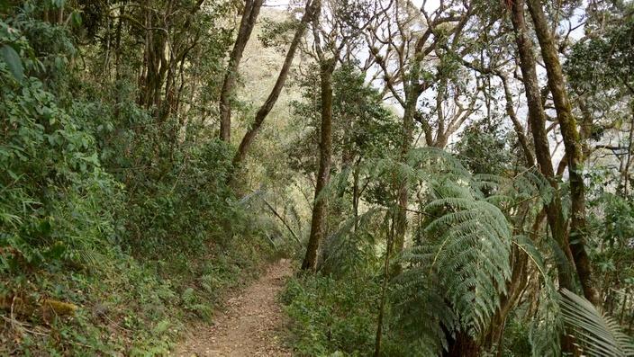Wald Valle de Cocora Salento