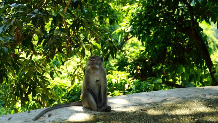 Lombok Monkey Forest