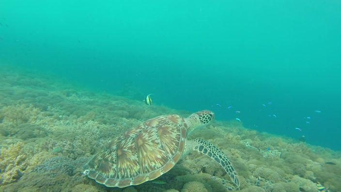Gili Trawangan Seaturtle Snorkeling