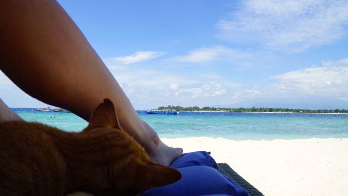 Gili T Beach View with Cat