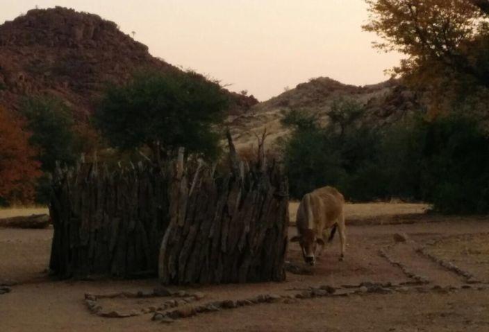 Namibia Aabadi cow