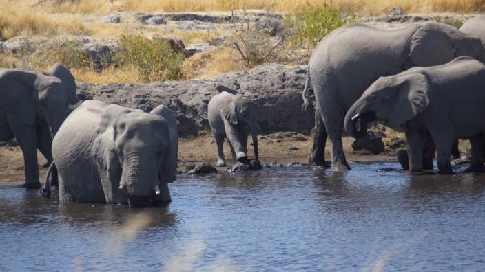 Namibia Etosha National Park Elefants