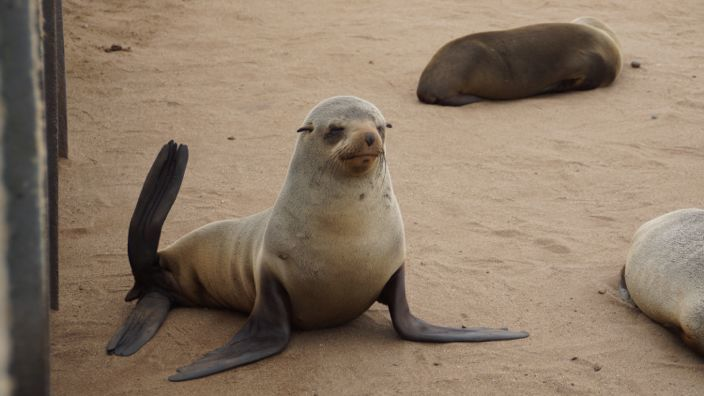 Namibia Cape Cross Seals
