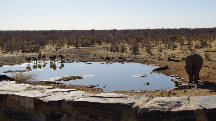 Namibia Etosha National Park waterhole