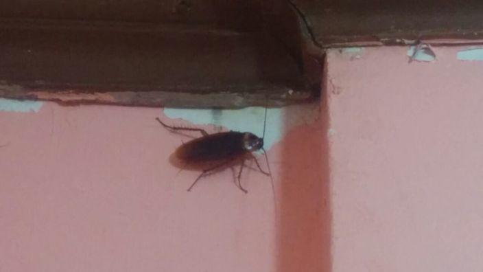 Coron Apartelle Gabrielle Bug