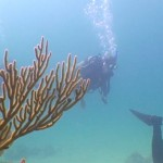Scubadiving Mexico Riviera Maya