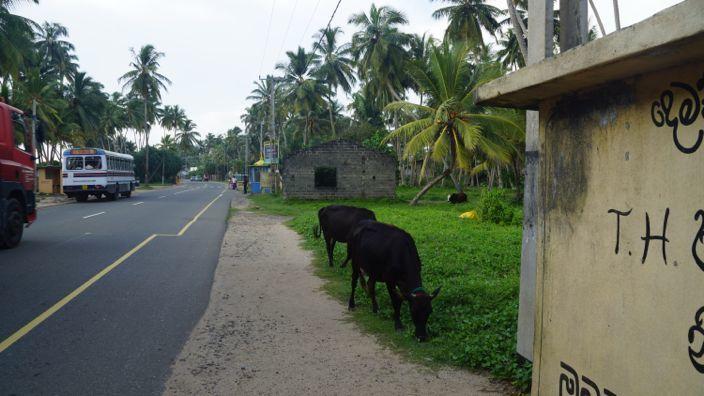Sri Lanka Bus Stop